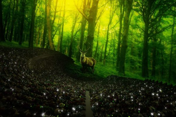 Forest_Stagg